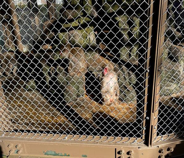 小田原でお猿さんに会ってきた